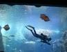 attractionshow.jpg