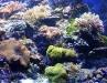 reeftank2.jpg