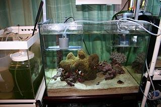 収容準備OK(左側の水槽ではワムシ培養中)