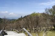 正木嶺から日出ヶ岳