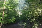 古屋辻(21世紀の森公園)