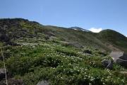 高山植物のお花畑