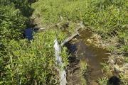 登山道は水溜まりの中