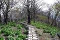 植生保護の木道