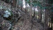 林業用の作業道