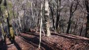 ねじりパンの木