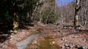 堰堤工事用道路の残骸