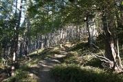 樹林地帯の上り