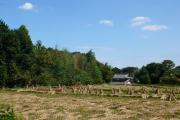 長閑な田園地帯