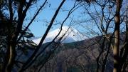 樹木の間から富士山