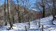 冬枯れの石棚山稜