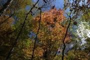 丁度紅葉のシーズン
