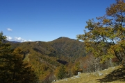 雲取山への登山道