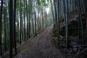竹林の心地良い道