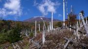 立ち枯れの倒木地帯