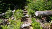 倒木が登山道を塞いでいる