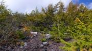 森林限界に近づく