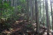 杉や桧の植林地帯