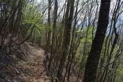 広葉樹林帯