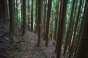 林道ショートカットコース
