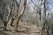 広葉樹林の尾根