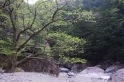 貫禄のある木