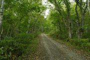 緩やかな林道を登って行く