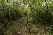 歩き易い樹林帯の登山道