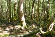 樹海特有の光景