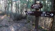 未舗装の南山林道