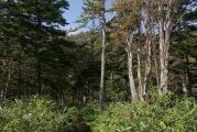 樹林帯を登って行く