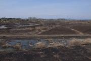 堤防の外側は湿地帯
