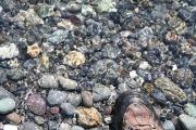 海に足を浸ける