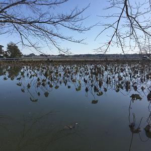 ため池釣り堀