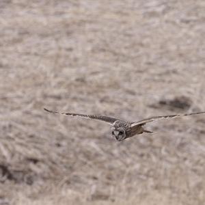 獲物を探す目つきは猛禽類