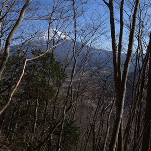 広葉樹林帯が続く