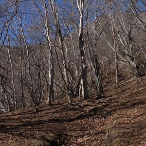明るい広葉樹林帯