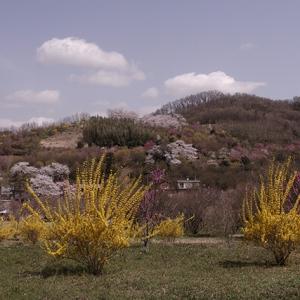 花見山へと続く周辺の道