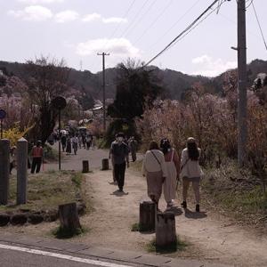 花見山は観光客で賑やか