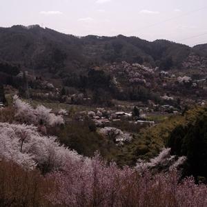 花見山を一望