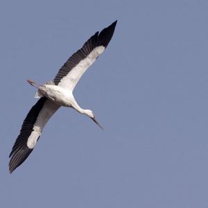 グライダーのような翼