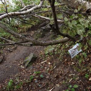 木々は横方向へ